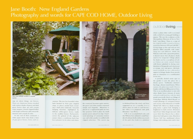 At one end of their courtyard,  white paper birch rises from a base of gray-green hostas, ferns, and euonymus.<br /><br />