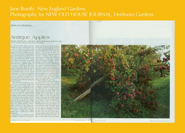 Heirloom apples are a great addition to any garden adding structure and a source of food.