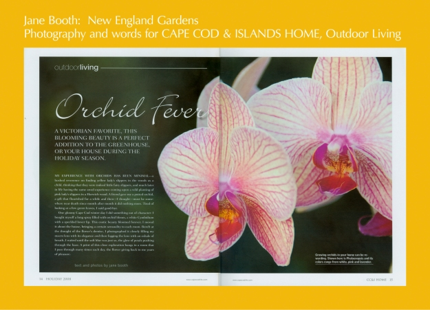 Phalaenopsis.  Growing orchids in your home can be rewarding.