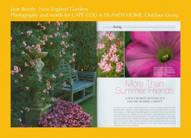 Favorite flowers for a Cape Cod garden include hardy roses, Guara, and 'Cotton Candy' Supertunias.